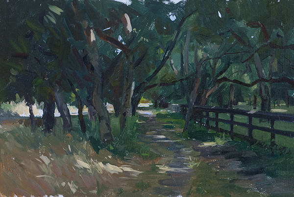 Plein air sketch of California Live Oaks.