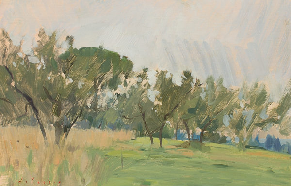 Plein air painting of an olive grove in Tuscany.