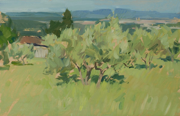 Plein air painting of olive trees in the midmorning light.