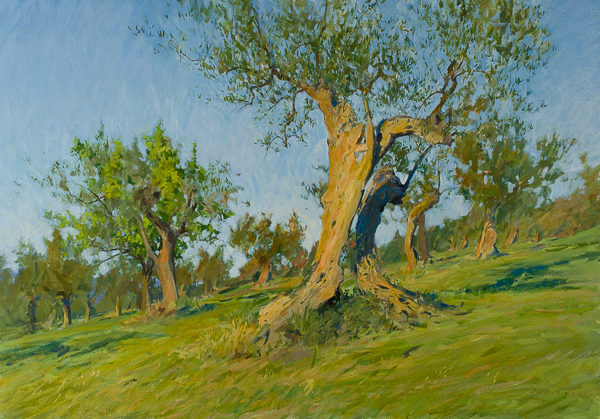 Large plein air landscape painting of an olive tree in Tuscany.