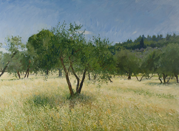 Plein air painting of olive trees in Tuscany in late May.